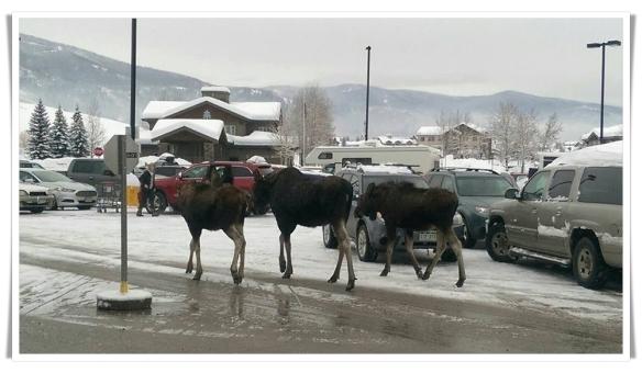 1-28-moose