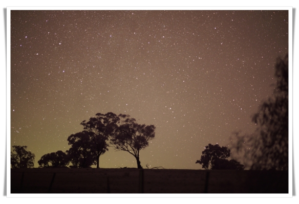 Startrees
