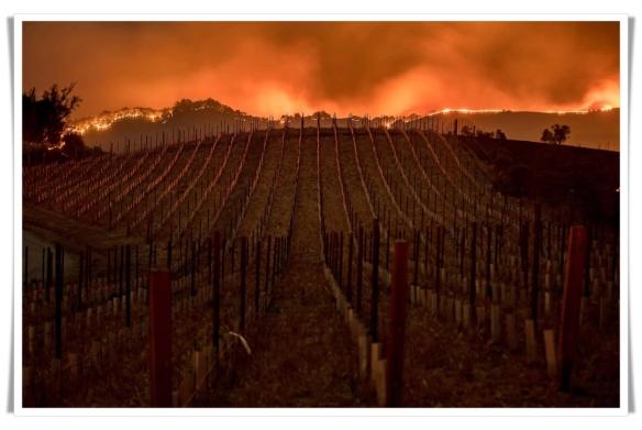 Snnday vinyard fires
